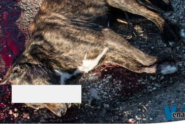 Cane ucciso a colpi di mazza