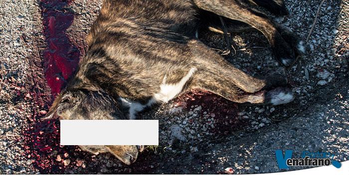 Photo of Cane ucciso a colpi di mazza