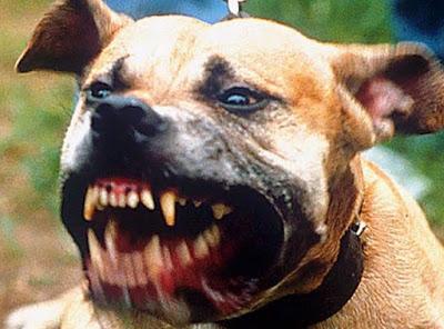 cane morsicatore