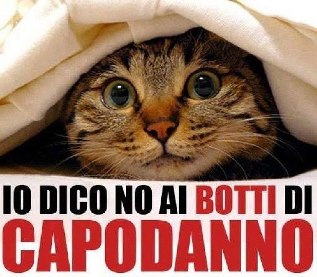 Photo of Cani e gatti terrorizzati o feriti dai petardi: stop ai botti a Natale e Capodanno