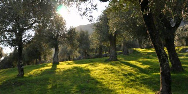 Photo of A Roma la premiazione del Parco regionale dell'olivo di Venafro, new entry nel Registro nazionale dei paesaggi rurali storici