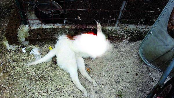 Photo of Venafro, cane decapitato in giardino: indaga la Forestale | PrimoPiano Molise