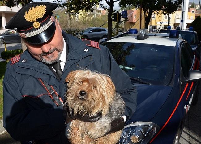 Photo of Abbandonato dal padrone sulla provinciale, cane salvato dai Carabinieri